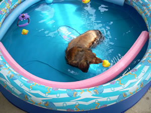 Dash doing water therapy in kiddie pool