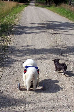 Dogs going down the road.