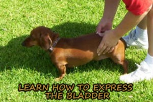 Easy to learn instructions for expressing bladders.