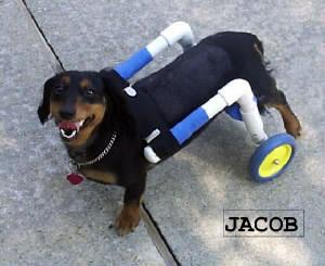 SMILING JACOB