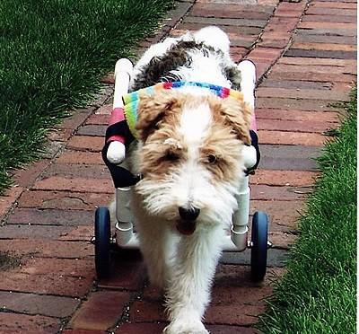 Volie in her Cart.