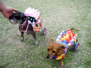 "Our Mary and her pal, Vienna in their ""blinged out"" carts!  They love the attention."