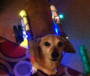 Who says it has to LOOK LIKE a wheelchair! Brownie all dressed in lights for Christmas.