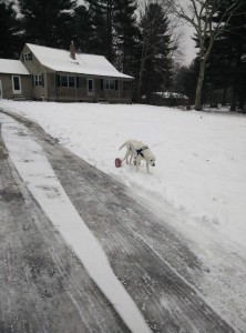 Buster in the snow.  He is a pro now!