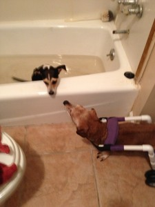 Buddy watching his girlfriend, Nike do her water therapy. He is in LOVE!