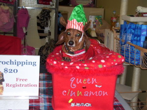 Our Cinnamon. A Doxie we rescued who cannot walk at all due to severe limb deformities. She accompanies us to festivals to demonstrate how amazing a disabled pet can be! She loves the attention (but not the hat, obviously-HEE HEE!)