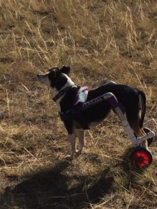 Nike in Wyoming. Sniffing the air for those antelope! She loves to chase the deer. Not going to tell her she will never catch one, or will she????