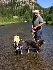 Larry in the Shoshone river with Molly, Ellie and of course, Nike our little cart dog! P.S. They all crossed without help!